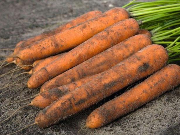Морковь Нерак