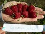 Малина Бриллиантовая