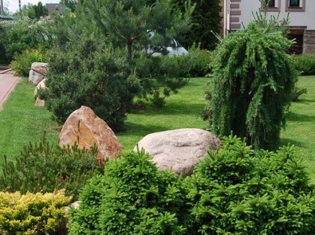 Оформление сада хвойными деревьями