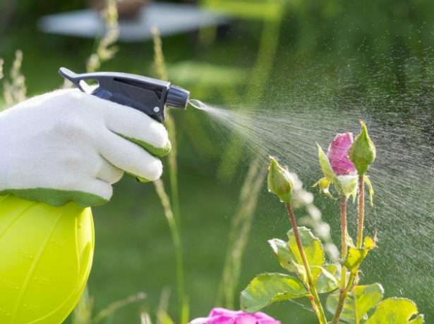 Обработка растений Фитовермом
