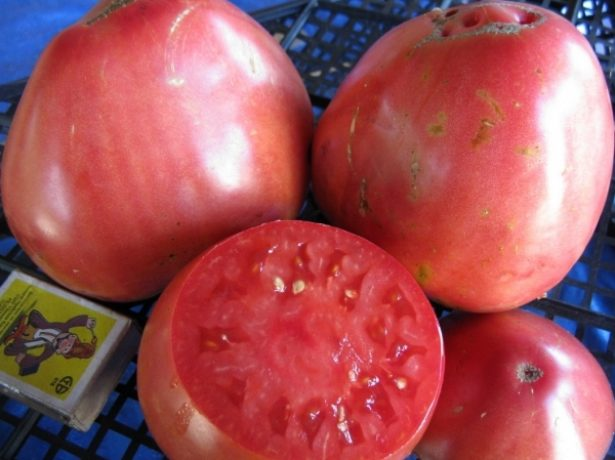 Плоды томата Пудовик