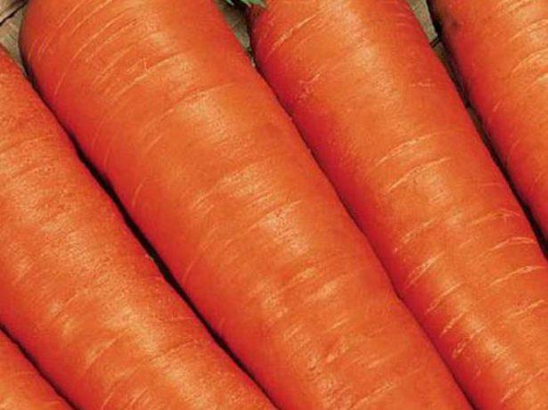Сорт моркови Топаз