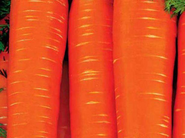 Сорт моркови Рогнеда