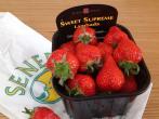 Клубника Ламбада — голландский сорт с десертными ягодами
