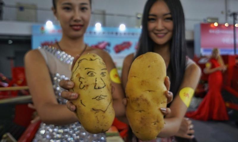 Выращивание картошки по-китайски