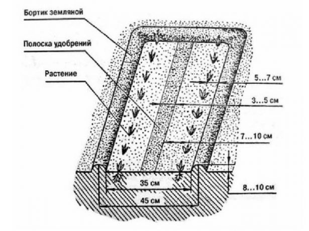 Схема грядки по Миттлайдеру