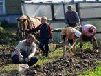 Как вырастить ранний картофель в любом климате