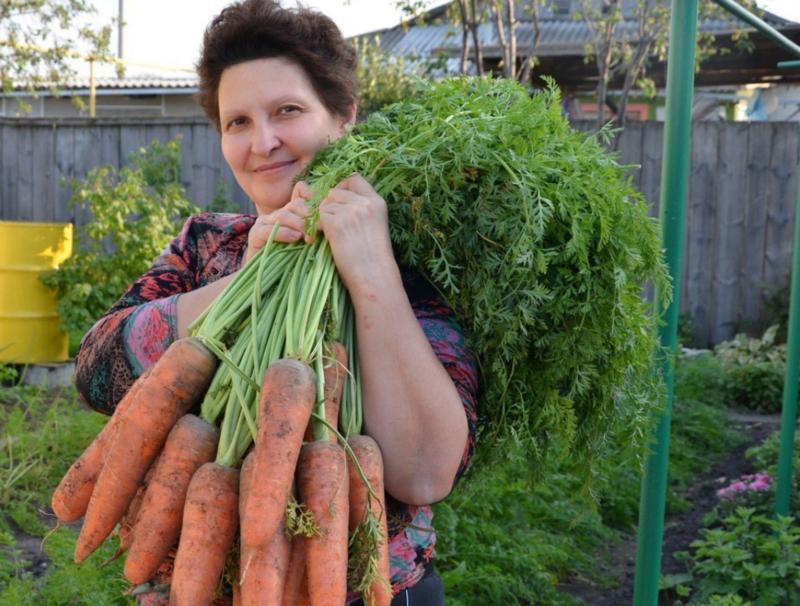 Морковочка-уралочка: выбираем лучшие сорта для Уральского региона