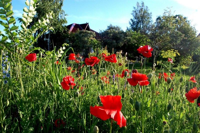 Что нельзя сажать на участке: запрещённые растения и последствия для садовода