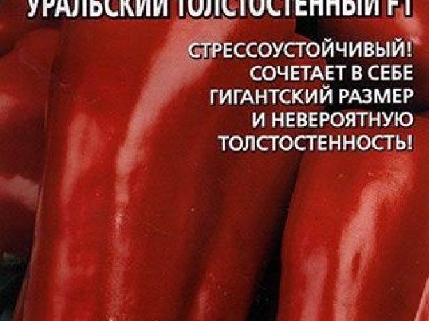 Сорт перца Уральский толстостенный