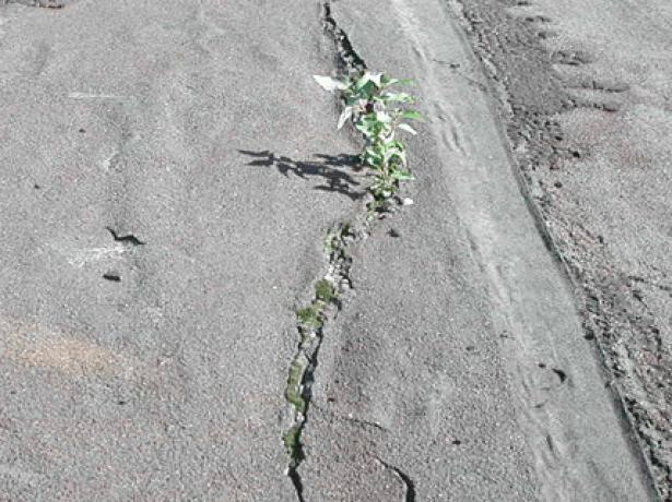 Растение на плоской крыше