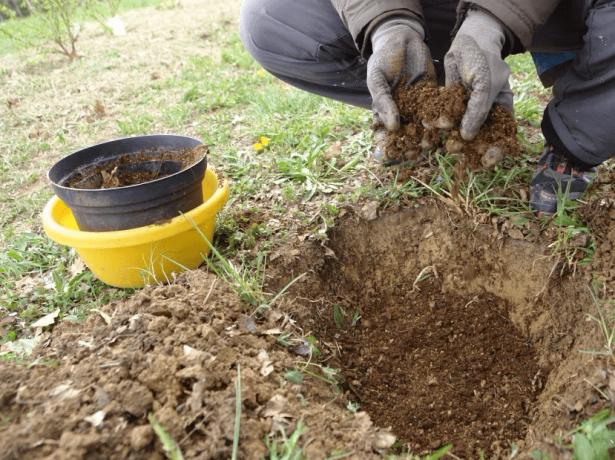 Почвосмесь для посадки жимолости