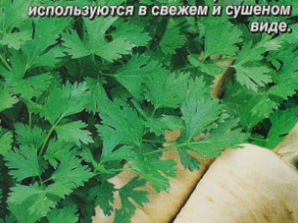 Петрушка Вершки и корешки