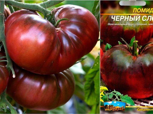 Плоды и семена томата Чёрный слон