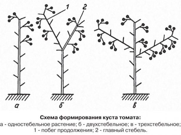 Схема формировки куста томата