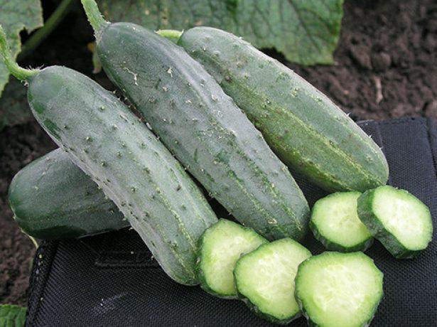 Плоды огурца Гектор в разрезе
