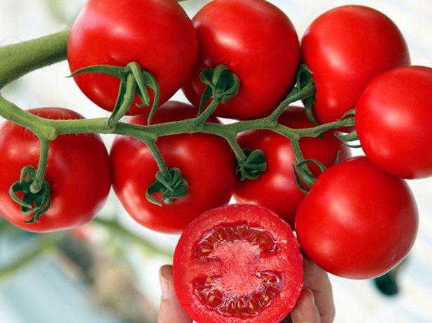 Плоды томата Интуиция