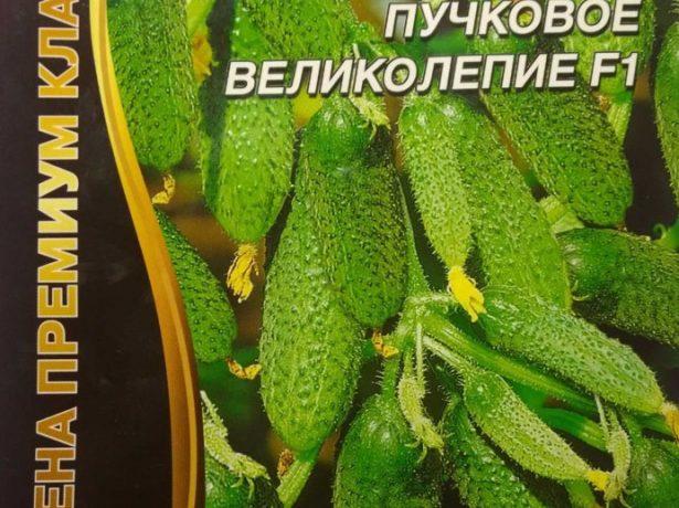 Семена огурцов Пучковое великолепие F1