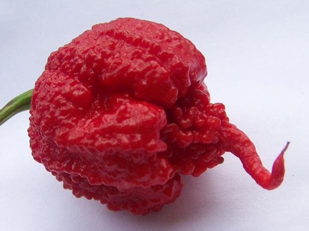Плод перца Carolina Reaper