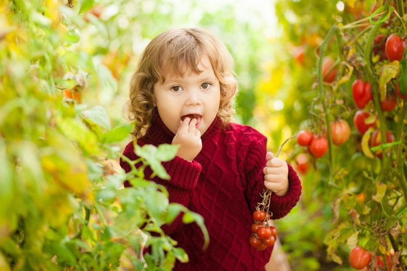 Дюймовочка — красивый и вкусный томат черри