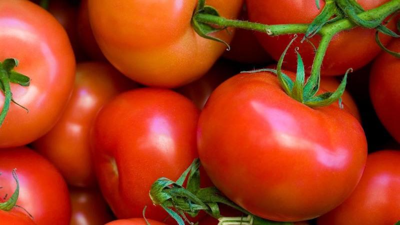Томат Андромеда – гибрид для выращивания на продажу