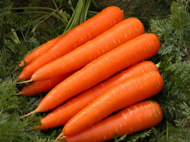 Плоды моркови Королева осени
