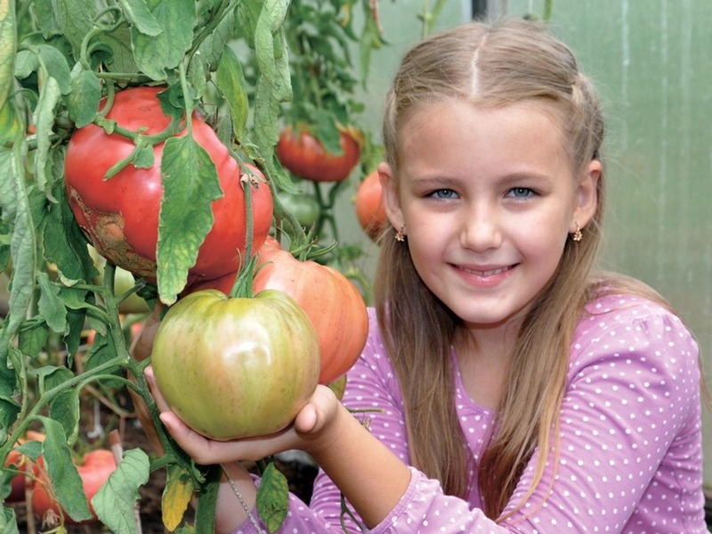 Урожай на славу: какие томаты отличаются небывалой отдачей