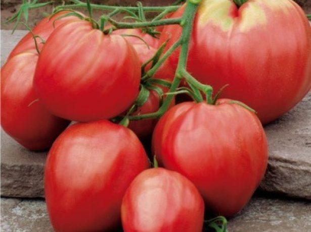 Плоды томата Сердце буйвола
