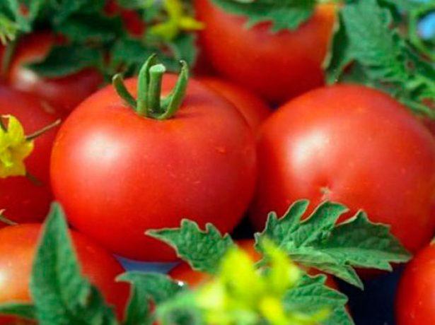 Плоды томата Анюта