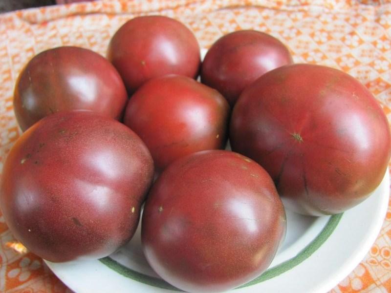 Томат Цыган: сорт для любителей плодов необычного цвета