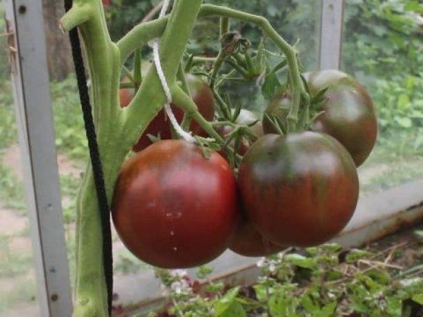 Кисть томатов Цыган