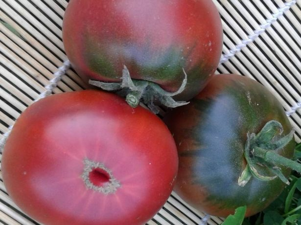 Плоды томата Цыган