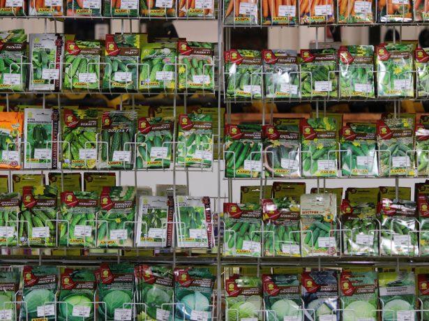 Семена огурцов разных сортов
