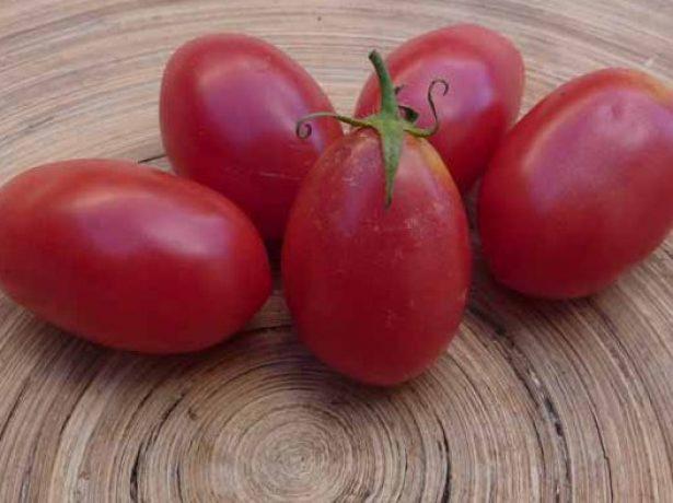 Плоды томата Чио-Чио-сан