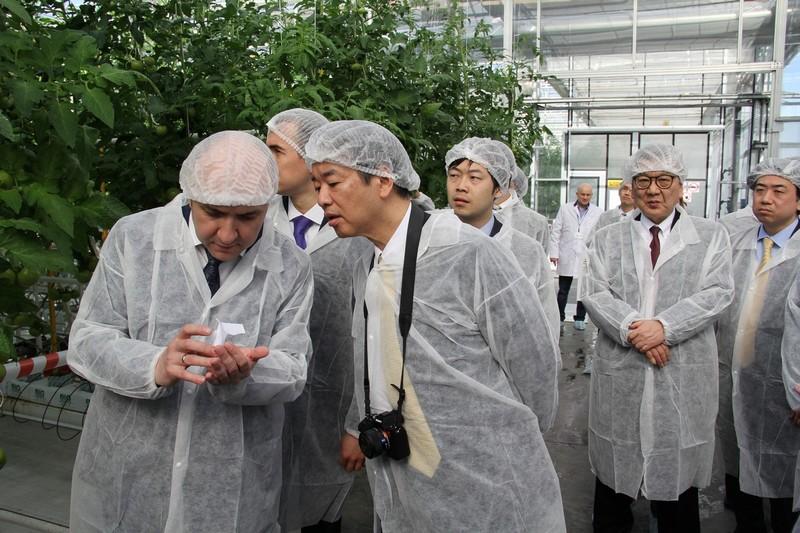 Огурцы в опилках: выращивание рассады по японской технологии