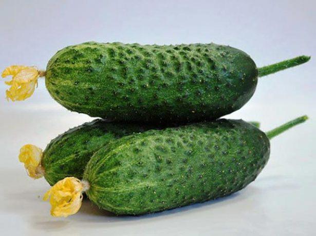 Зеленцы сорта Кибрия