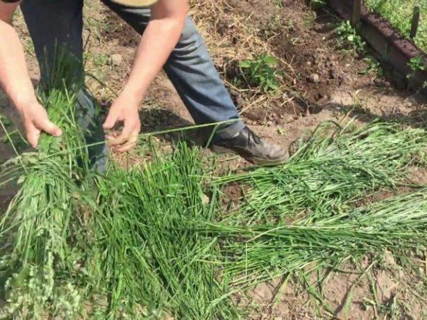 Трава без корней
