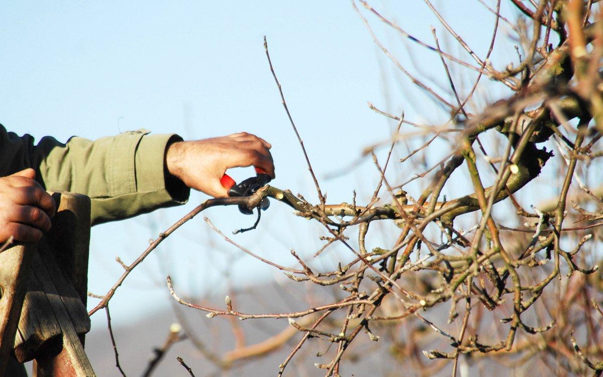 Весенняя обрезка яблонь — приводим сад в порядок