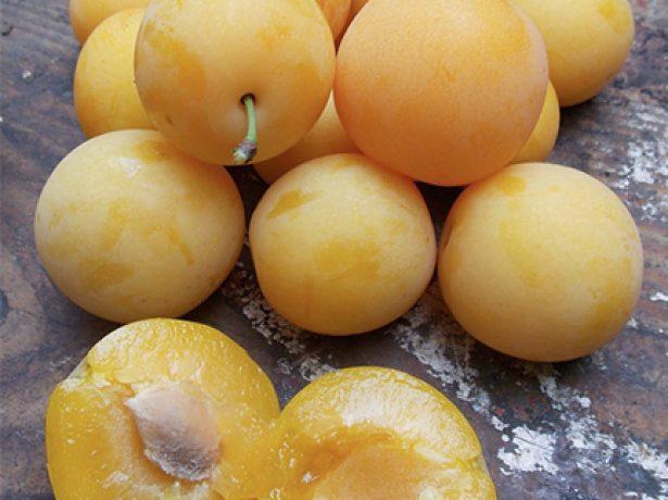 Плод алычи Гек в разрезе