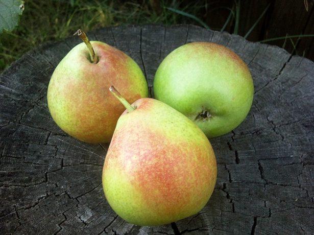 Плоды груши Мраморная из Воронежа