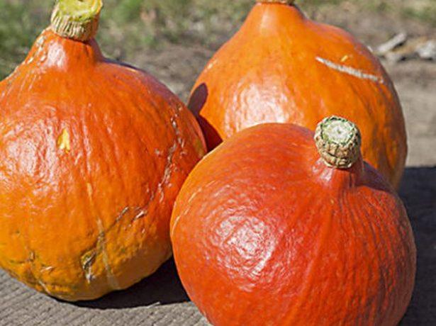 Плоды тыквы Вита