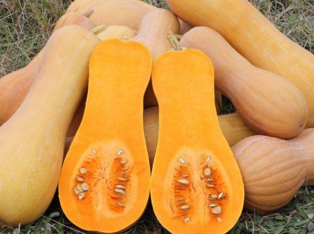 Плоды тыквы Прикубанская