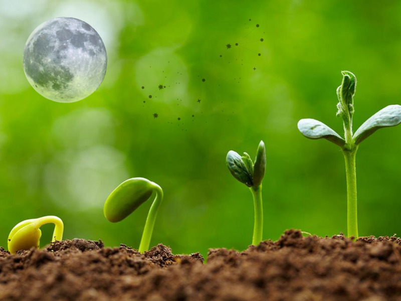 Звёздная геометрия дачника: лунный календарь работ в саду-огороде на 2020-2021 год