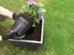 Как посадить на участке красавицу-гортензию