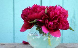 Бордовые пионы в вазе