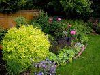 Спирея и цветущие растения