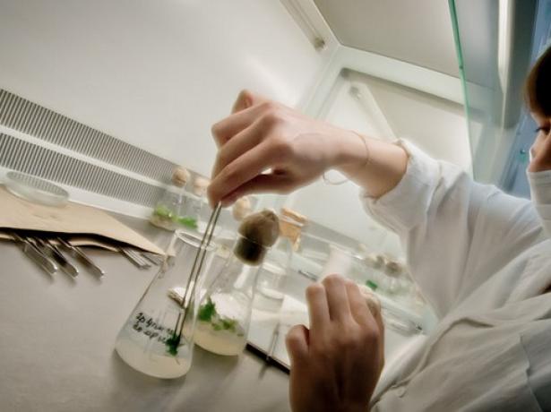 Селекционная работа учёных
