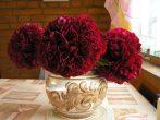 Мсьё в красном: подборка лучших сортов пионов красных и бордовых оттенков