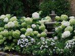 Гортензия: двадцать любимых сортов российских садоводов