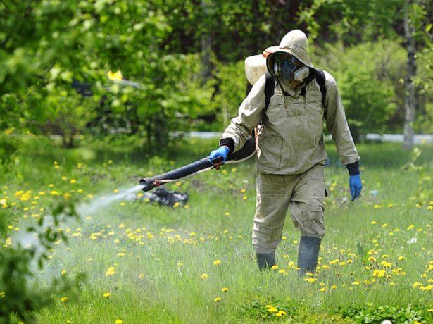 Обработка садового участка против клещей